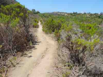 Gonzales Canyon Open Space (Torrey Pines Loop Trail)