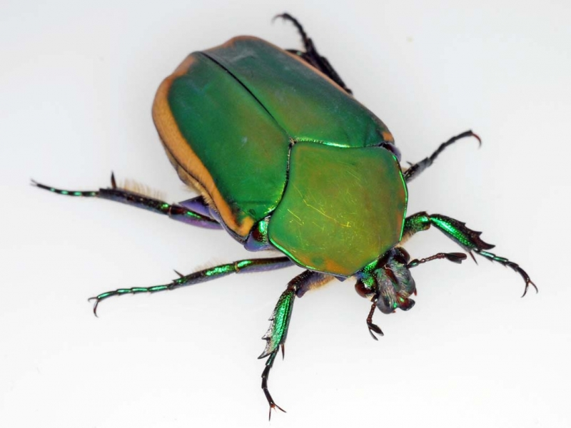 Tags : insect bug herbivore